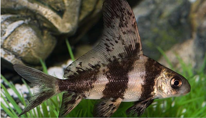Hình ảnh cá trường giang hổ