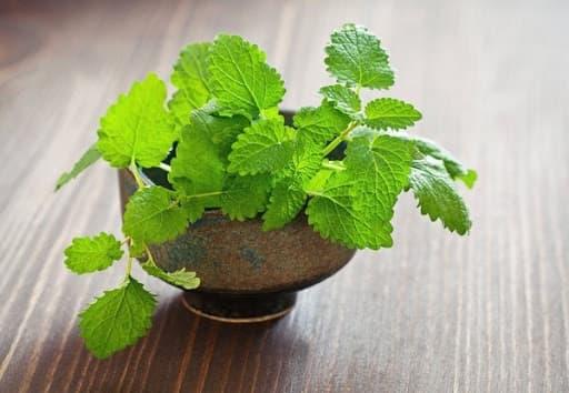 5 loại thảo dược hữu ích có thể trồng ngay trong văn phòng