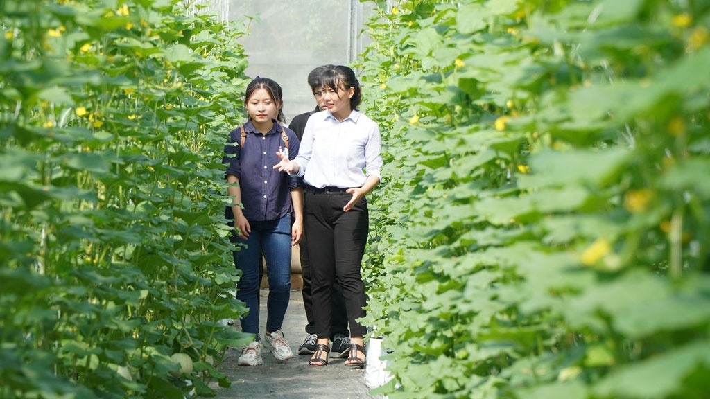 Nữ thạc sĩ X cất bằng về quê trồng nông sản sạch