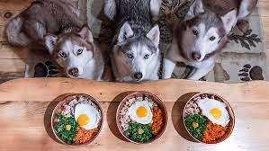 Chọn thức đơn phù hợp cho chó Husky để chúng tiêu hóa tốt hơn