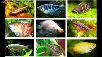 Tổng hợp danh sách các loại cá cảnh nước ngọt Việt Nam