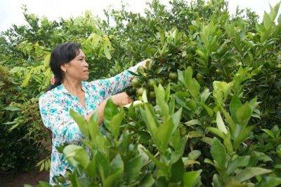 Biến vùng đất 'chết' thành vườn cây ăn quả cho thu nhập cao