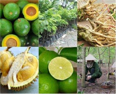 Những loại cây có giá trị cao biến nông dân nghèo thành tỷ phú