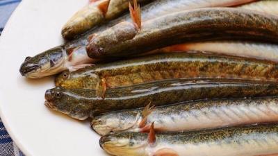 9 Công thức chế biến món ngon từ cá kèo,dễ làm