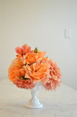 Trồng hoa thược dược nhiều màu khoe sắc rực rỡ quanh năm